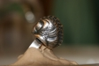 trilobyte-ring